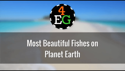 Most Beautiful Fishes